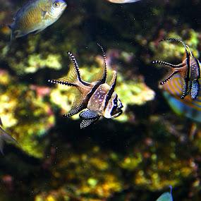 Aquarium Fish by Marsha Biller - Animals Fish ( aquarium fish,  )