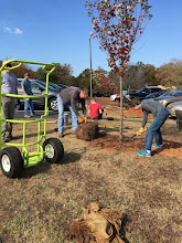 Photo: Tree Planting Service Project. October 2016.