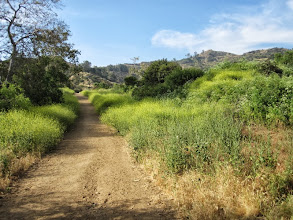 Photo: Now on the trail ascending north in Western Canyon. Mt. Hollywood stands on the skyline in front of me.
