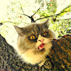 by Arun Acharya - Animals - Cats Portraits