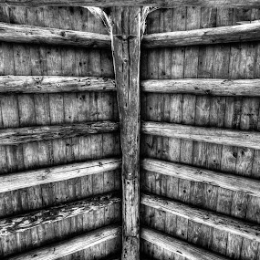 Natural Ceiling by Nolan Hauke - Buildings & Architecture Architectural Detail ( black and white )