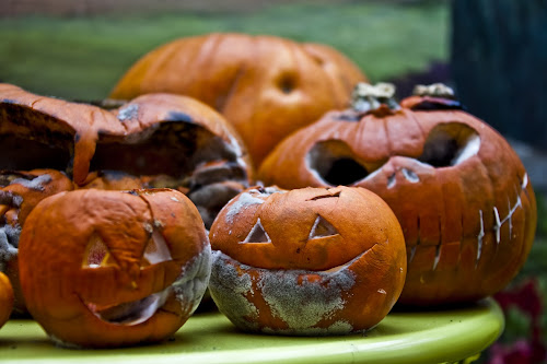 Bad, bad pumpkins by Antony Sendall - Public Holidays Halloween ( scary, carved, faces, mouldy, pumpkins, bad, horror, rotting, halloween )