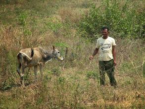 Photo: Sok Vanna and breeding calf sponsored by Canadian Landmine Foundation