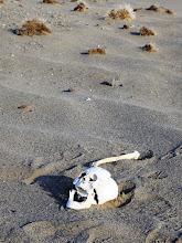Photo: Неподалеку от Жанжин-обо мы увидели еще одну загадку: череп и кости скелета едва прикрывал песок. Всё собрали и захоронили.
