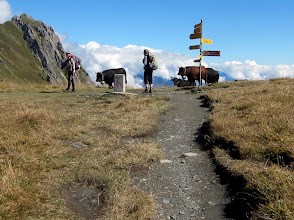 Photo: A  stone pillar and cows mark the French-Swiss border at Col de Balme (7230 ft./2204 m.)