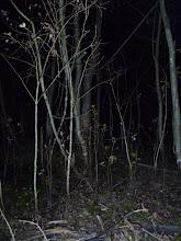Photo: Загадки во тьме