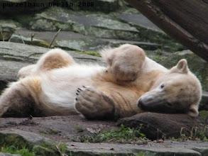 Photo: Hm, ist ein gemuetliches Jutekissen fuer mein Eisbaerkoepfchen :-)