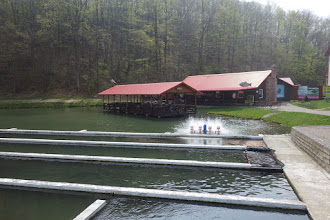 """Photo: pstruží farma s možností rybolovu a smažírna ryb """"Pstrąg"""" (pstruh) v  Moszczance"""
