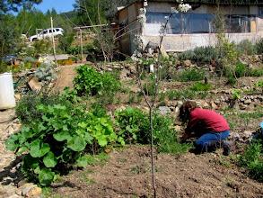 Photo: their nice garden