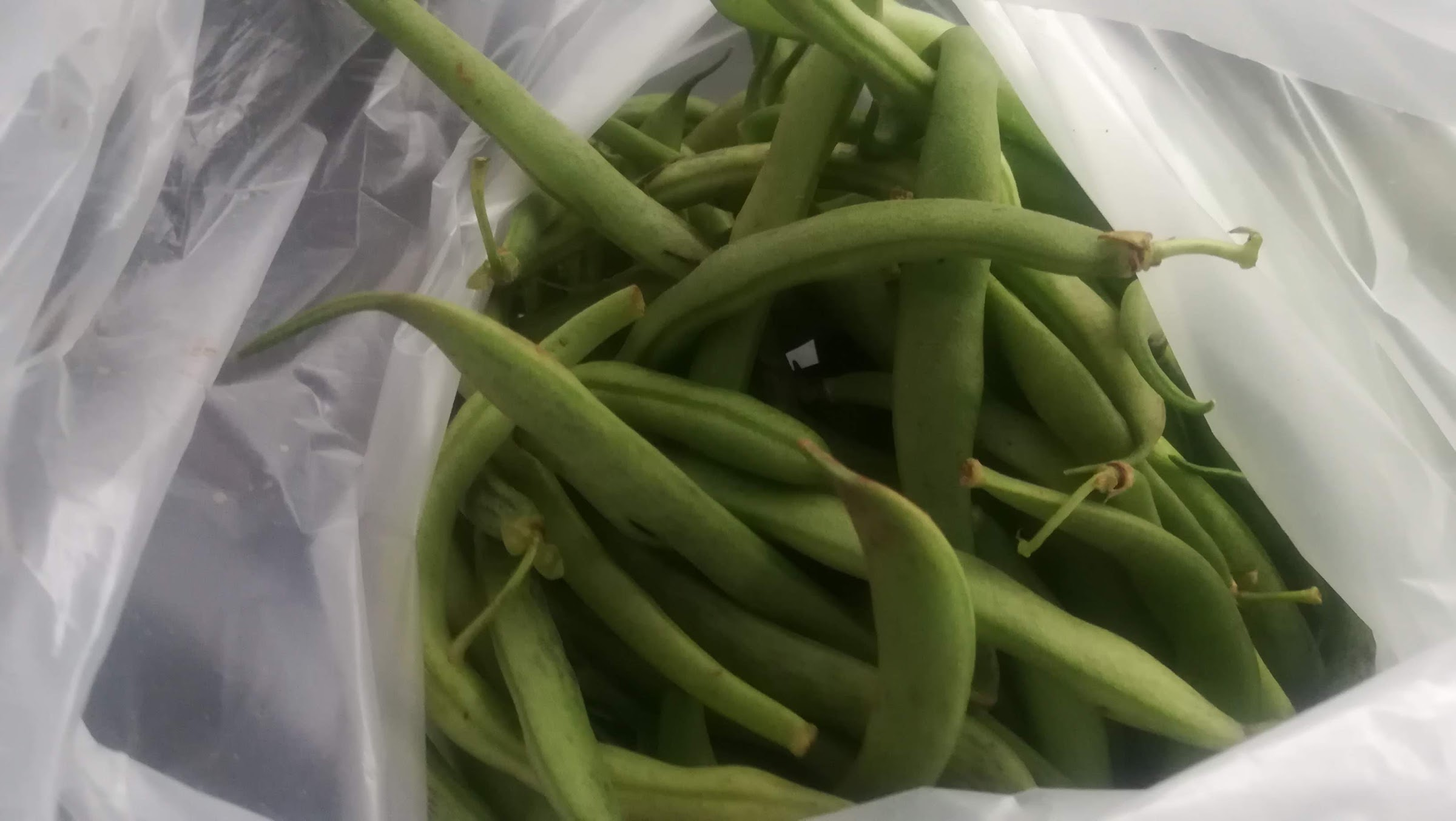 Not an exotic vegetable but still very nice: fresh green beans!