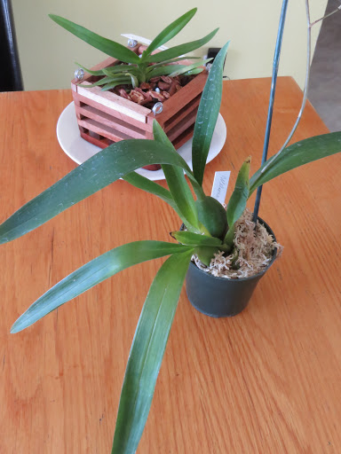 Les orchidées de Grigri Cvns_E0fmG0sOT8etM-3Mc0TtKEsU9SaIa6WokS2HfMPbspB1ZDsiT0wuGKIk4tKGyJkbtiYulqXv3UEf76Ewauzmib6M_whTazdUzc9LKyNIiyJtqG4Lmv8KU9RRJkuKMDujZ4