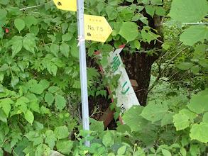 標識は草に覆われ