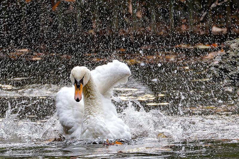 Sotto la doccia  di alagnol