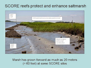 Photo: Marsh regrowth