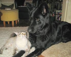 Photo: Voorzichtig kijkt Sinjo omhoog en weet niet wat HIJ er van moet denken....