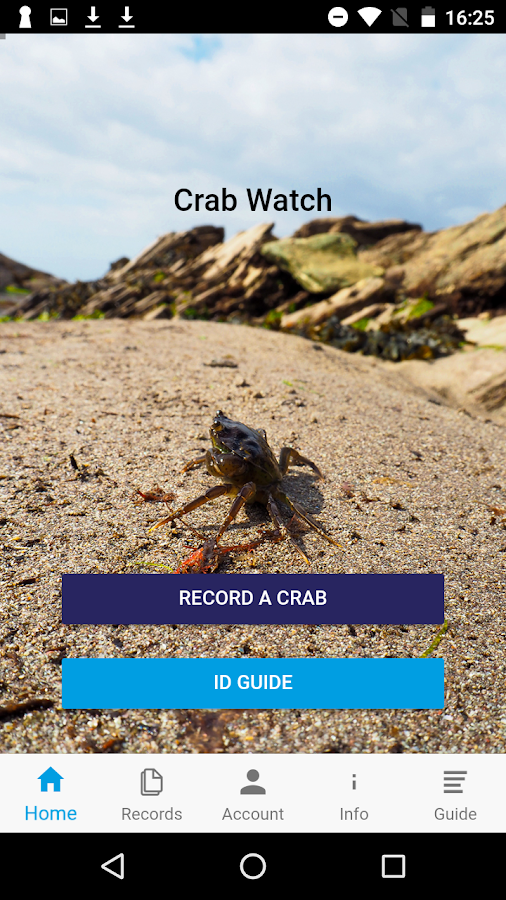 Crab Watch- screenshot