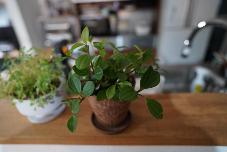 観葉植物スナップ