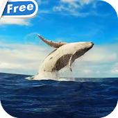 Whale HD Video Live Wallpaper