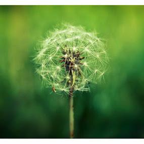by Manash Kaushik - Flowers Flowers in the Wild