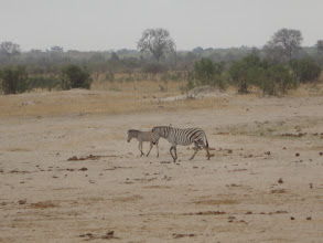 Photo: Baby and mother head to the waterhole.