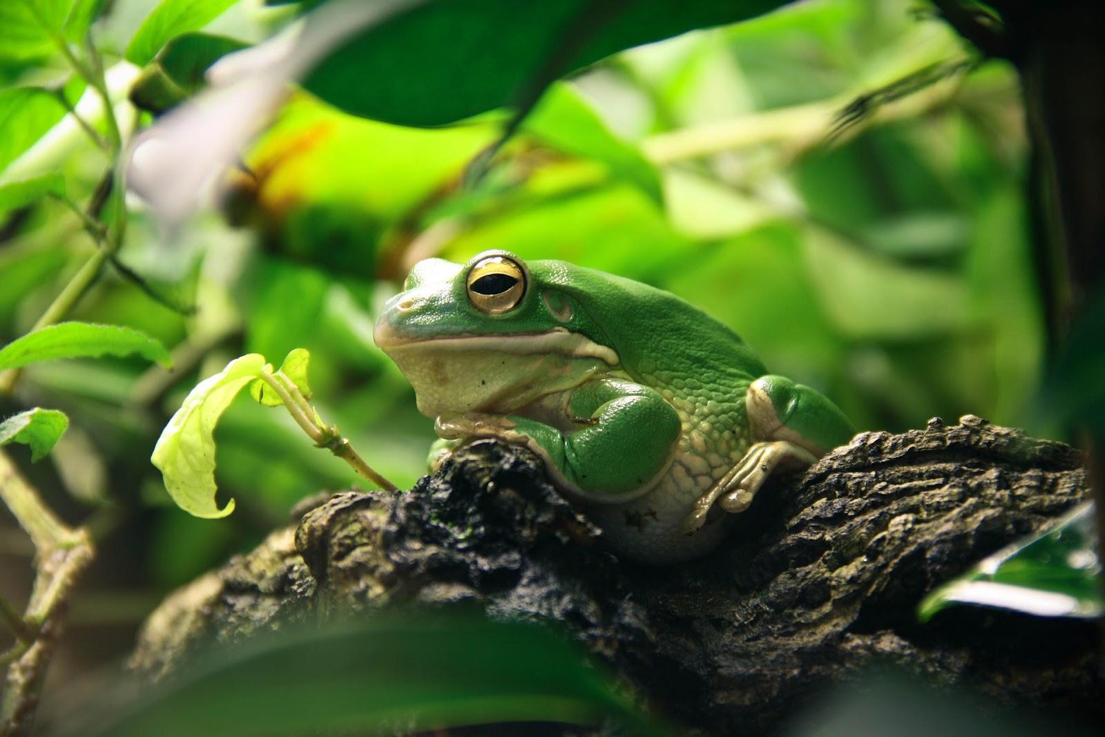 Frog sitting among plants