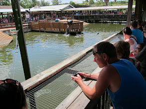 Photo: Feeding gators at Gatorland