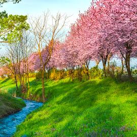 Morning springtime by Stefan Sorean - Landscapes Travel