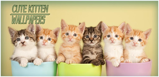 Cute kittens are waiting for you in cat wallpapers app! Grab kitten pictures!