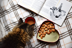 Are Almonds toxic to Cats