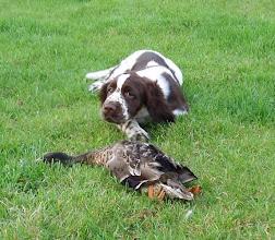 Photo: Pepsis första kontakt med fågel 12v gammal