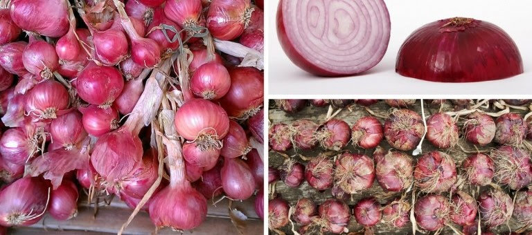 Cancer Fighting Health Benefits of Red Onions