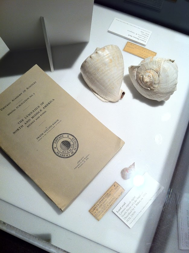 Specimens and publications on display