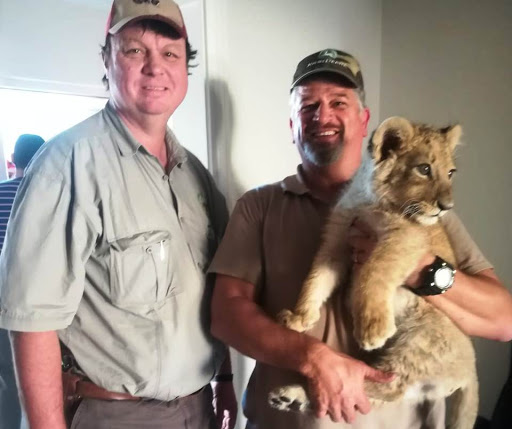 Lion cub trafficked from Limpopo rescued in Cape Town suburb