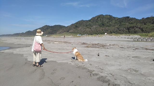 シェリー初めて海に行く