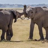 Cute Elephants Wallpapers