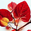 wallpaper hd all leaf icon