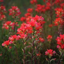Wildflowers by Brenda Shoemake - Flowers Flowers in the Wild