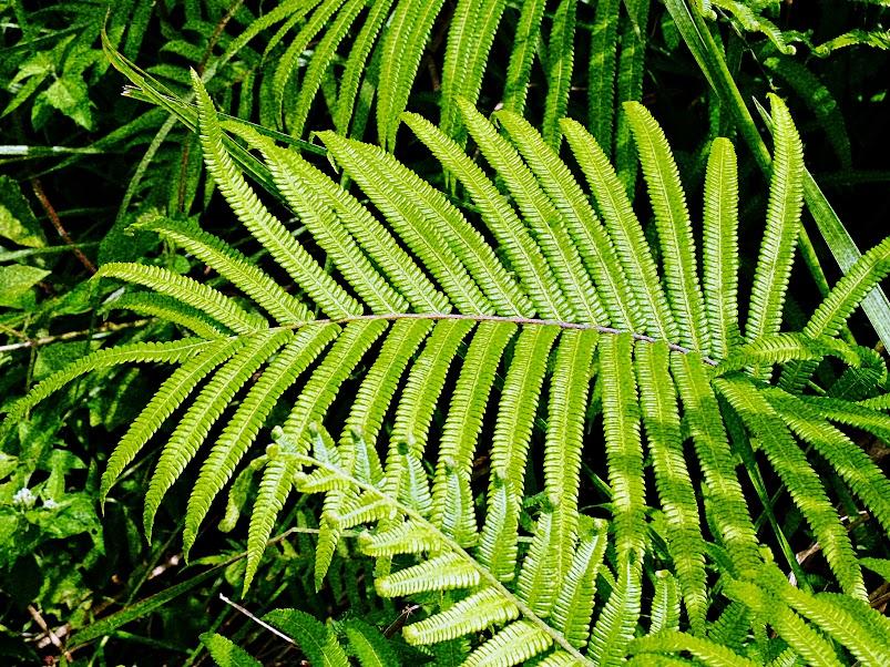 ubud bali green scenery