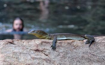 Photo: Monitor Lizard, Kimberley, Western Australia
