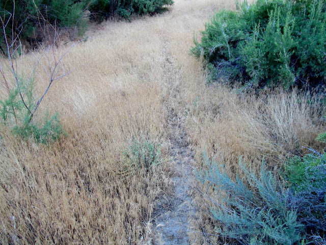 Cheatgrass everywhere!