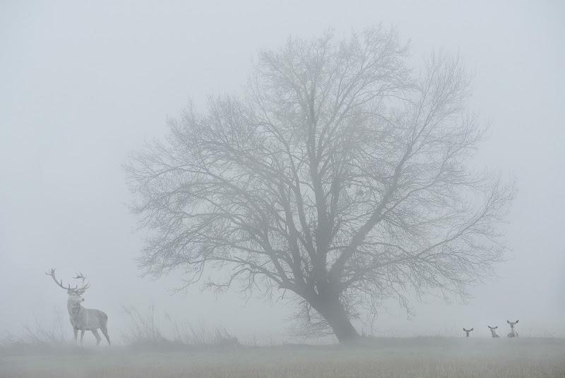 Sguardi nella nebbia di BASTET-Clara