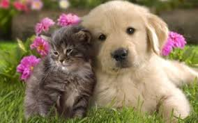Image result for cute cat  and dog cute