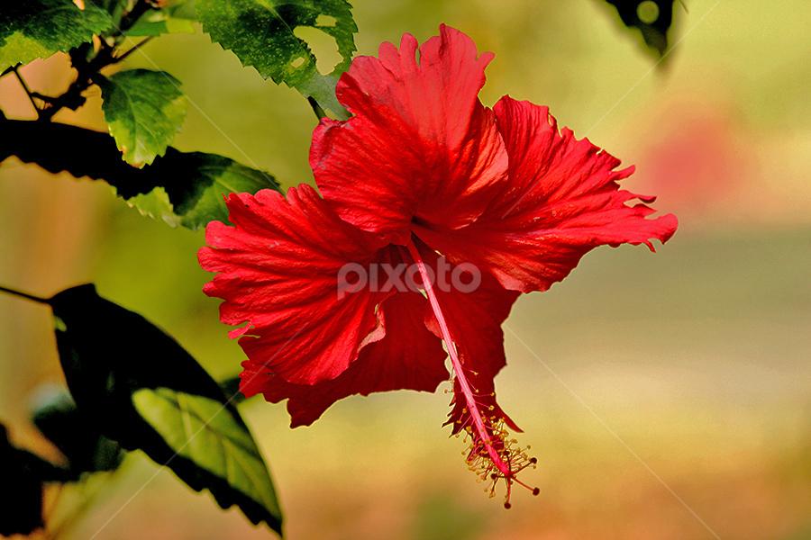 A thing of beauty | Single Flower | Flowers !!! | Pixoto
