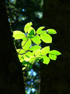 GREEN LIGHT di PhotoLoris