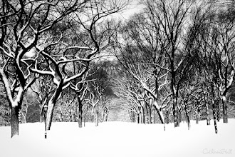 Photo: Central Park, New York City