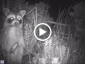 Video: Long Point Wildlife Refuge