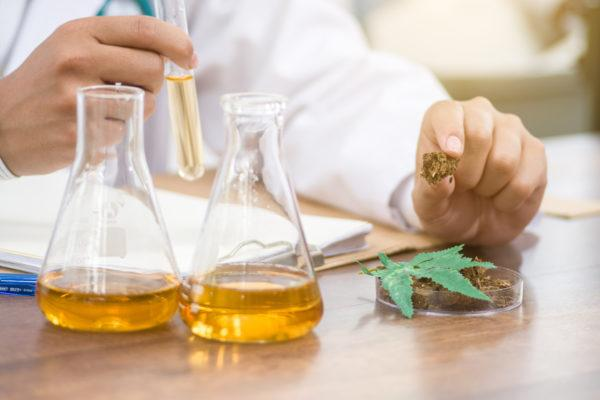 What Is the Difference Between CBD Flower And Oil? - Techno FAQ