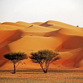 by Lealiza Seiler - Landscapes Deserts ( sands, desert, trees, golden sands )