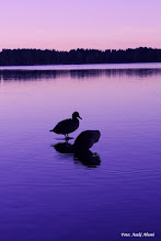 Photo: At Sognsvann Lake in Oslo, Norway