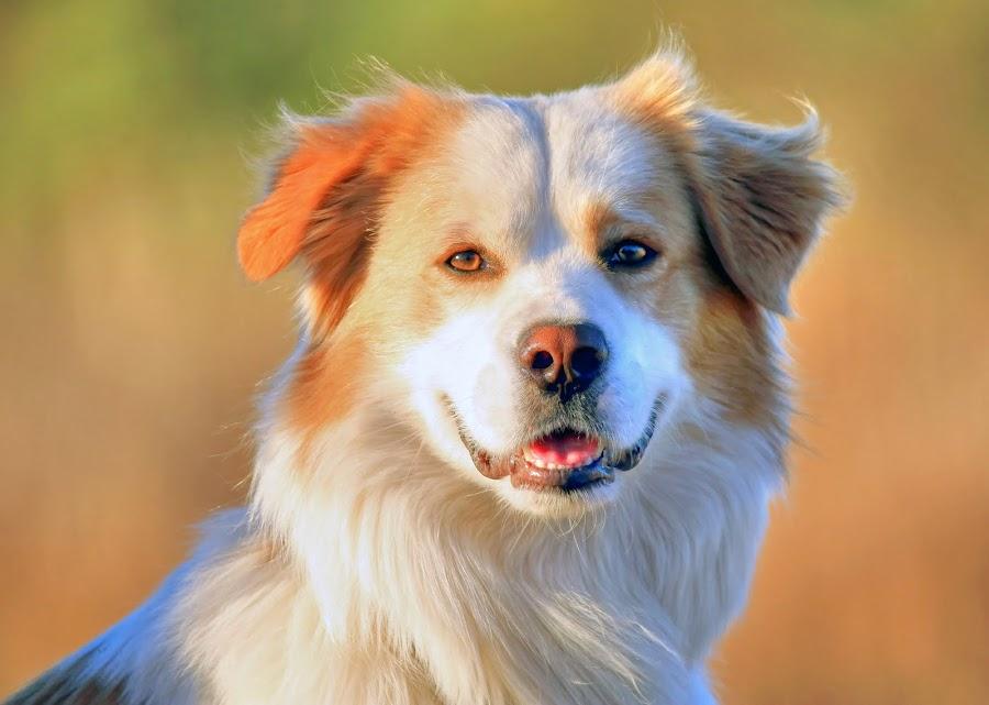 Falcor by Steve Hatton - Animals - Dogs Portraits ( canine, dog portrait, dog, falcor )